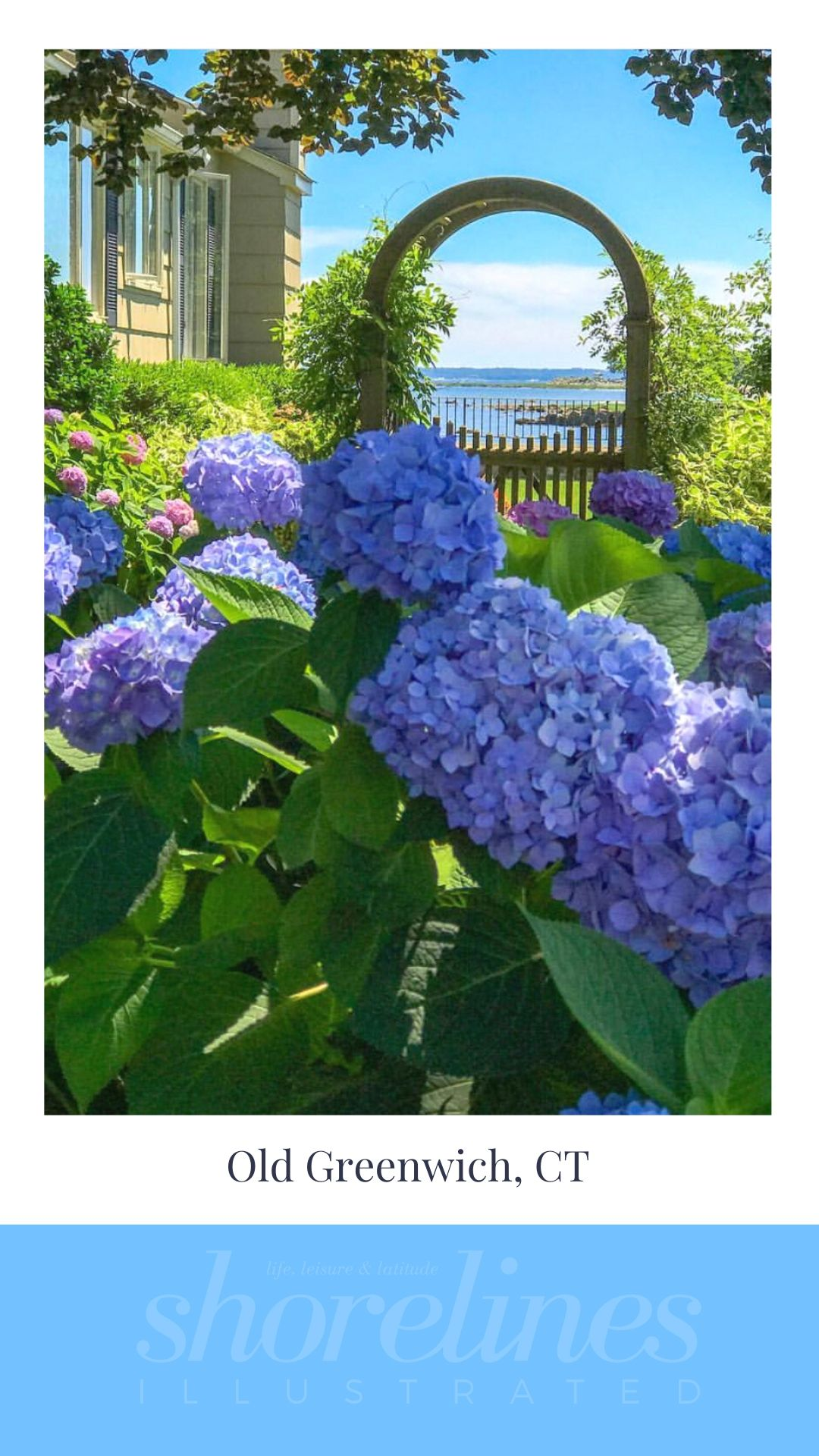 Blue Hydrangeas of New England-9