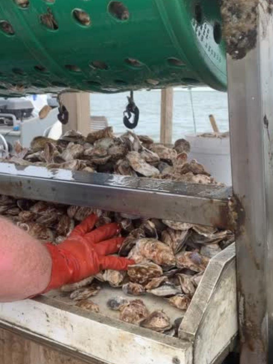 Signature-Oyster-Farm-Tour-Katama-Bay-Oysters-Marthas-Vineyard-11