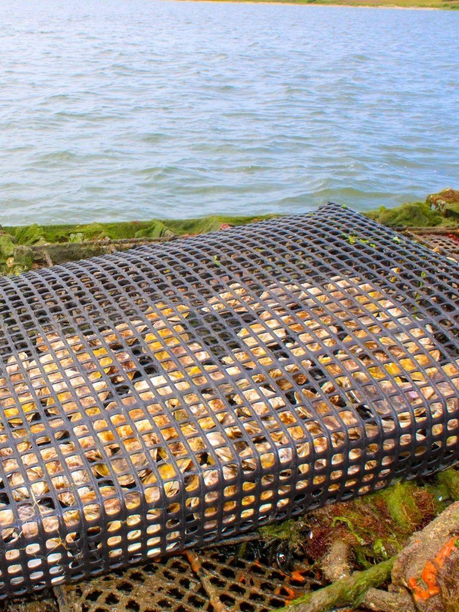 Signature-Oyster-Farm-Tour-Katama-Bay-Oysters-Marthas-Vineyard-6