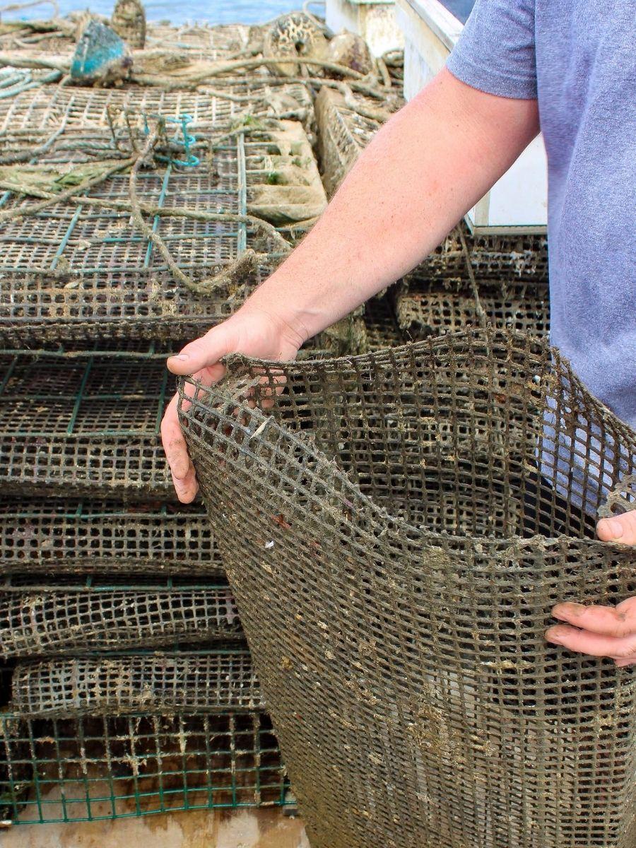 Signature-Oyster-Farm-Tour-Katama-Bay-Oysters-Marthas-Vineyard-8