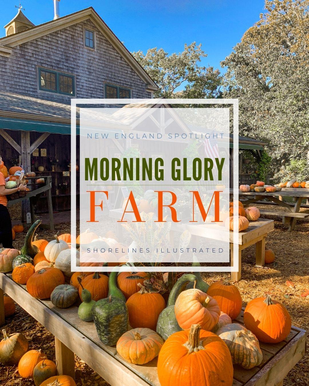 Morning Glory Farm Marthas Vineyard-1