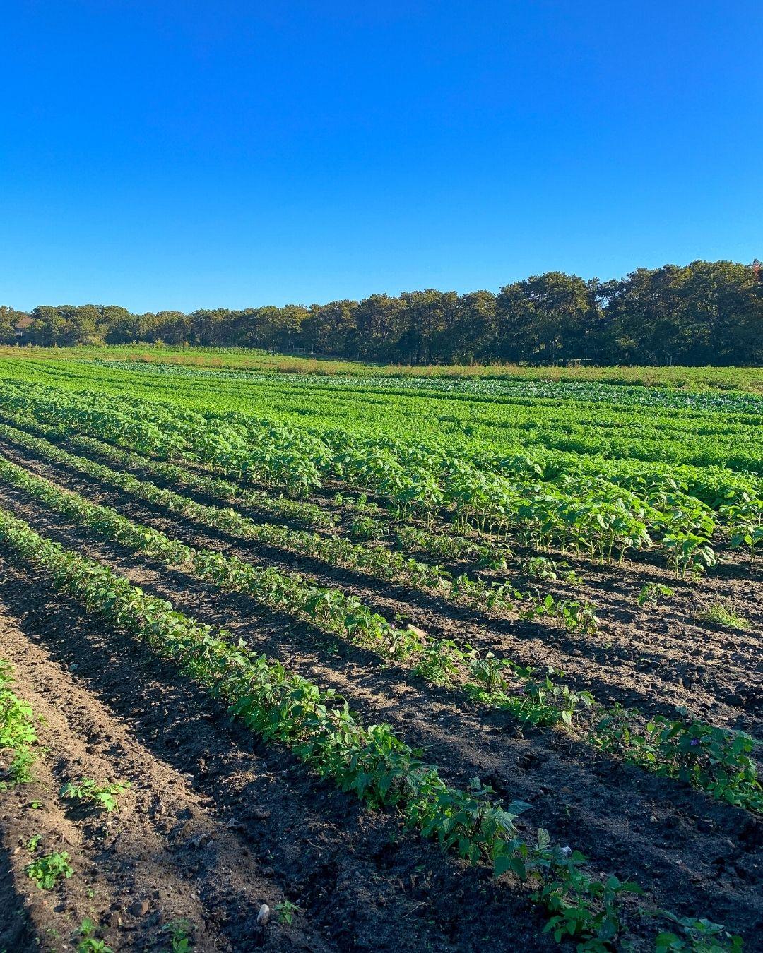 Morning Glory Farm Marthas Vineyard-2