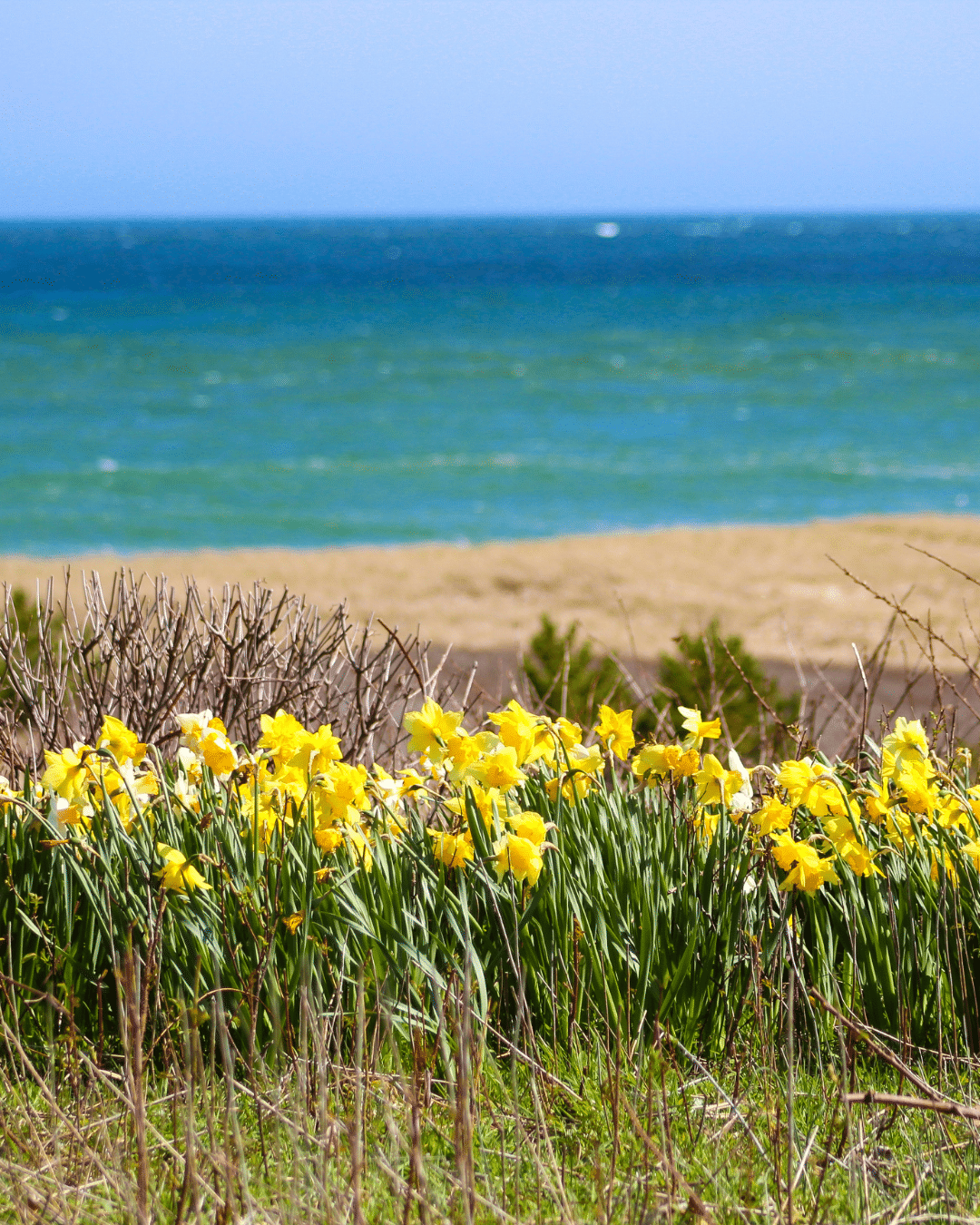Grasses - Yellow