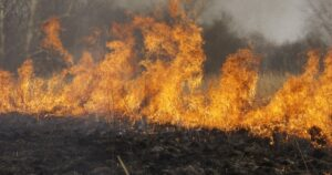 Escaping a prairie fire on burnt out ground