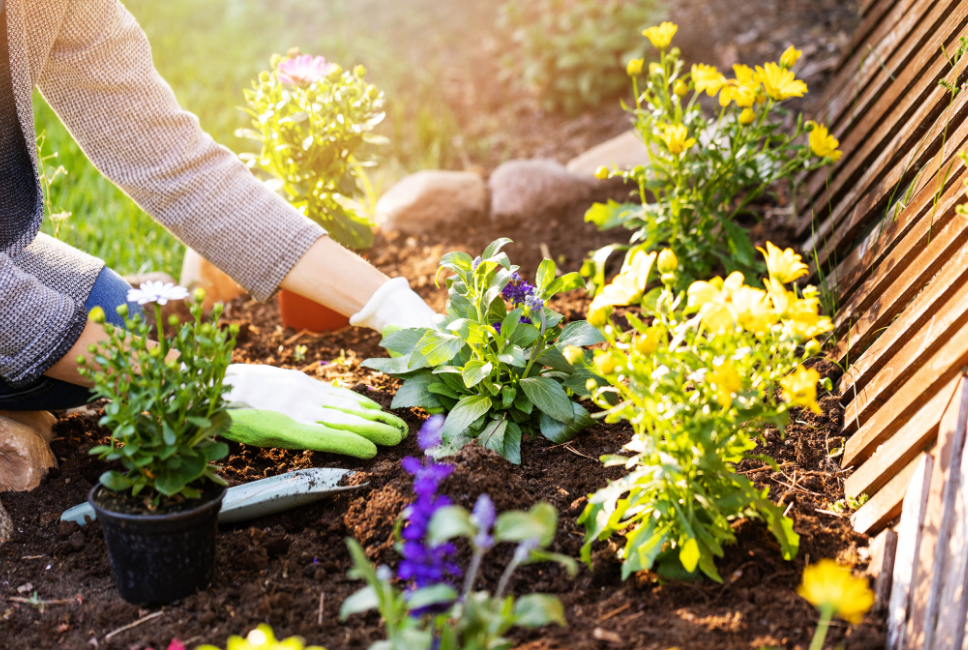 Read more about the article You are the Gardener