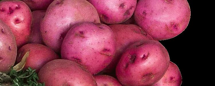 Zuckerman Red Potatoes