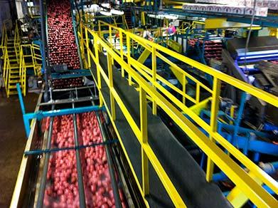 Potato Assembly Line