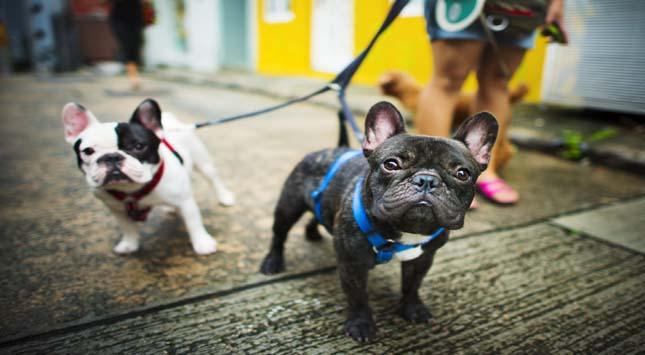 Tips to Adopt Dog
