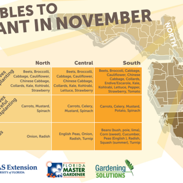 Edible Plants for your garden in November