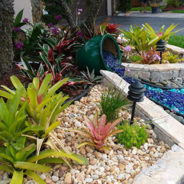 Looking for a low maintenance plant?