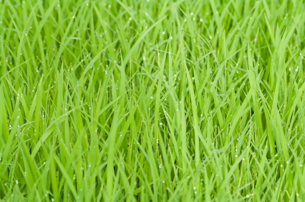 How to choose the proper grass for your lawn.