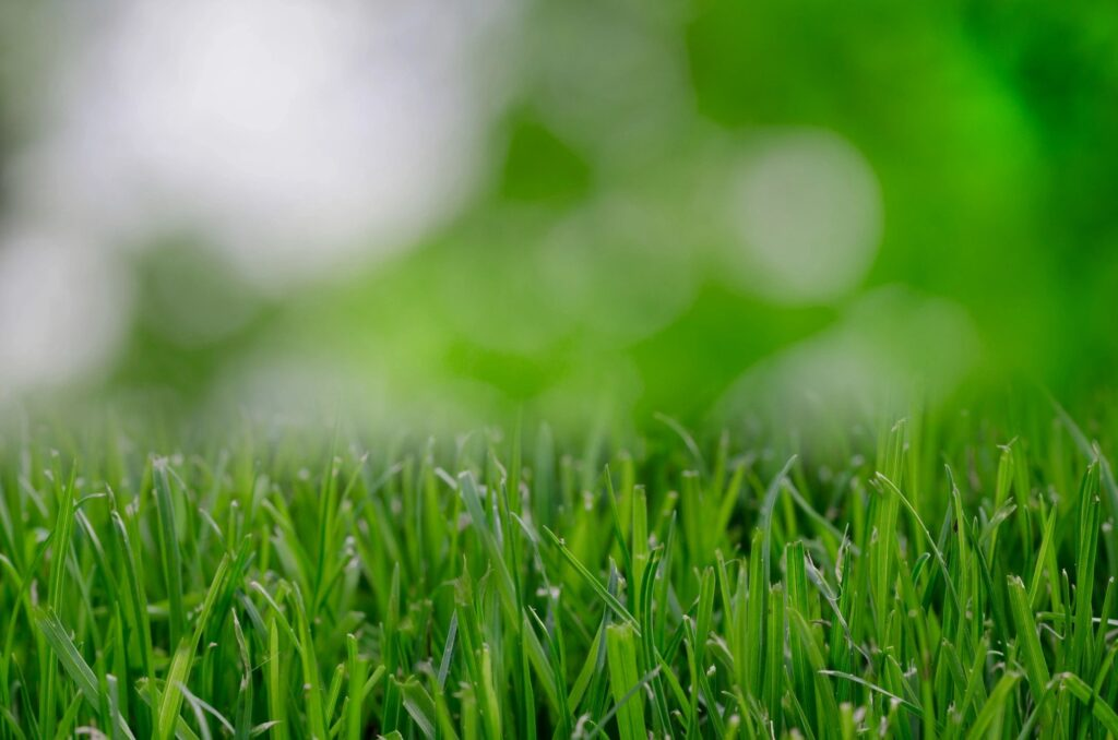 Is your lawn invaded by pesky dollarweeds (pennywort)?