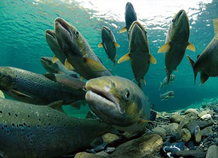 FishScreens1