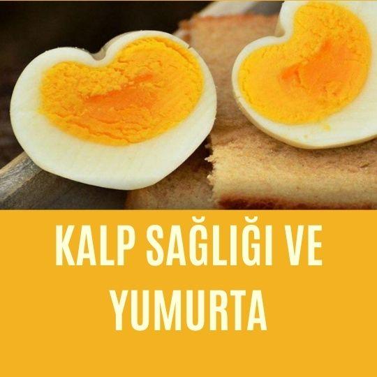 Kalp sağlığı ve yumurta