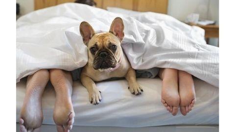 Evcil hayvanları yatağa almayın