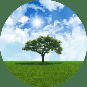 clean air tree