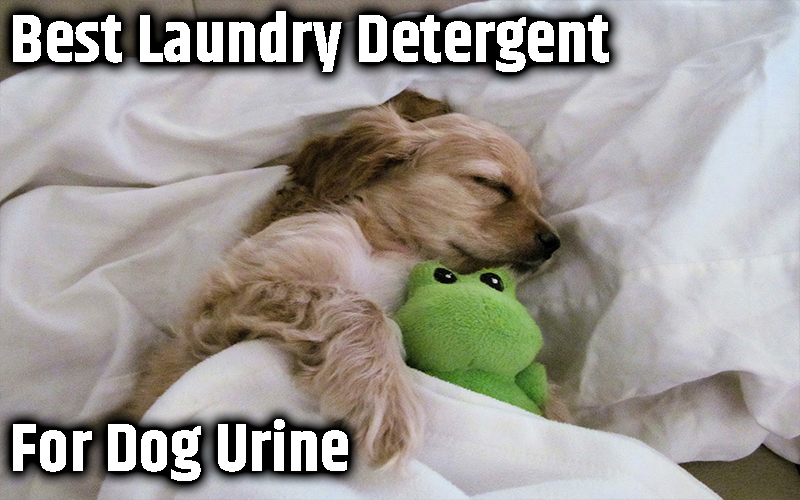 Best Laundry Detergent for Dog Urine