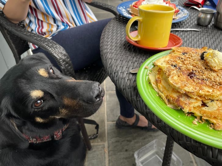 Ban On Dogs On Outdoor Restaurant Patios In Evanston To Be Lifted