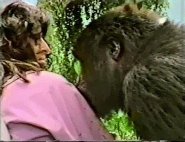 Writing From the Heart – How a Letter Put Me Eye to Eye With a Mountain Gorilla and Changed My Life