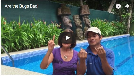 Are the Bugs Bad in Costa Rica?