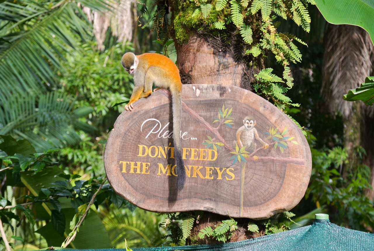 3 Catastrophic Consequences When Tourists Feed Monkeys – Part 1