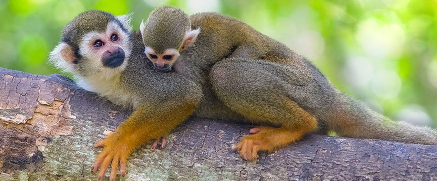5 Must See Costa Rica National Parks