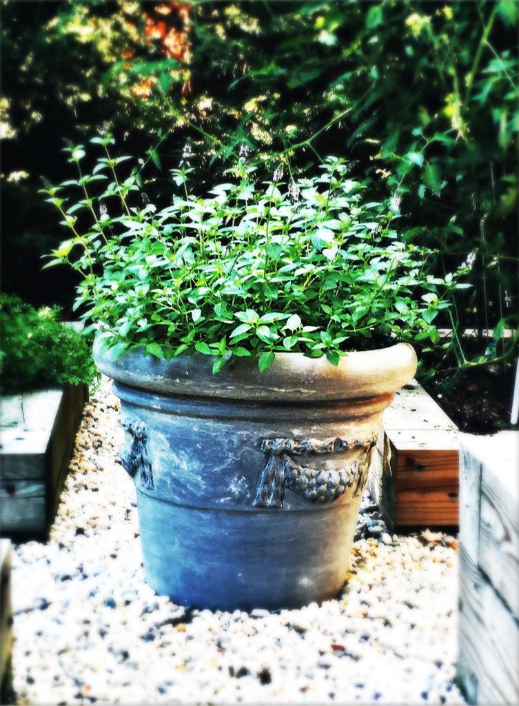 A Pure Life Nutrition, Garden Mint