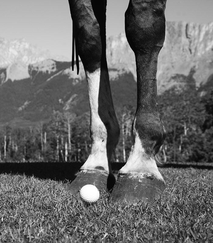 Brewster's Golf, Kananaskis Ranch - a horse next to a golf ball