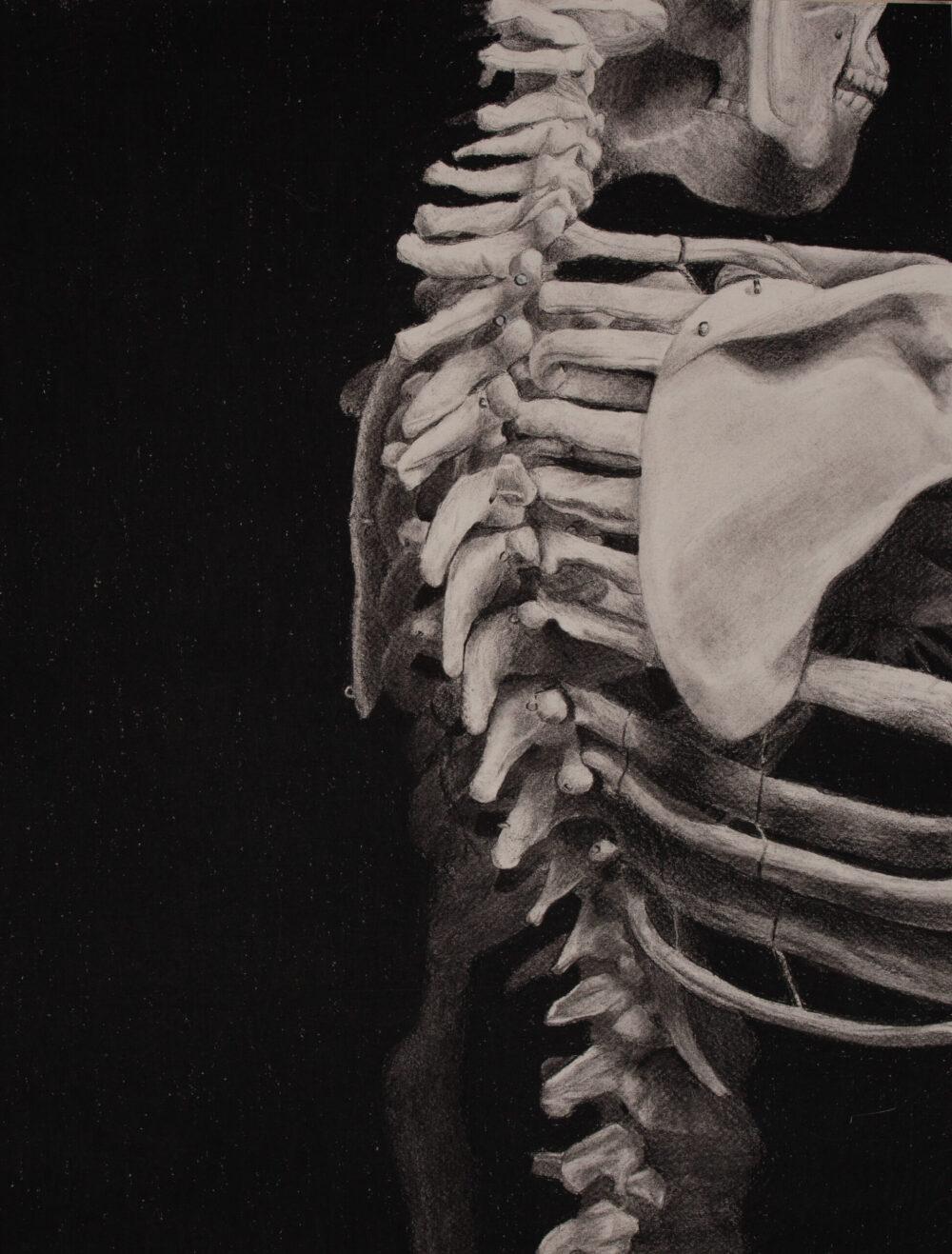 Skeleton Charcoal Drawing