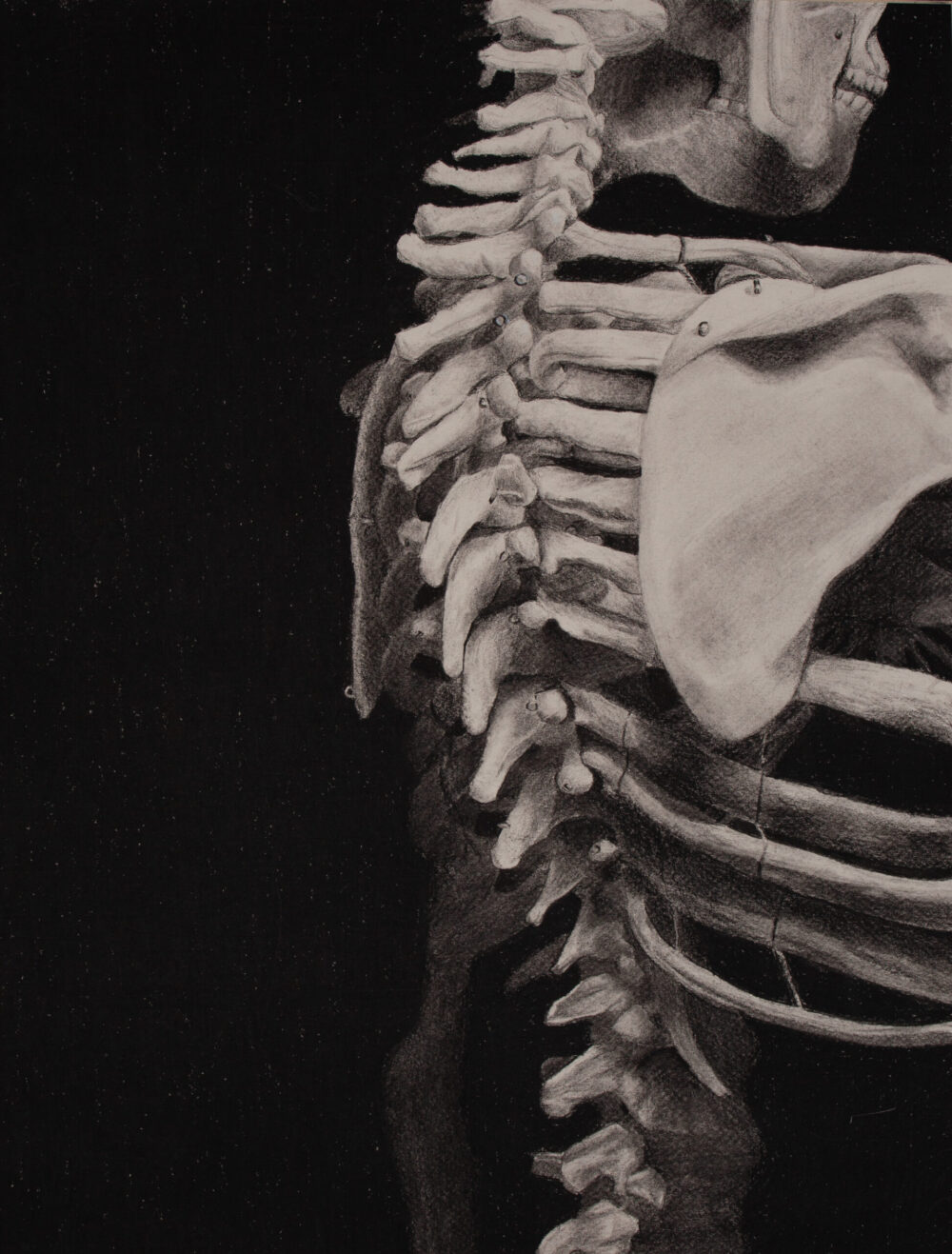 Skeleton Charcoal Drawing