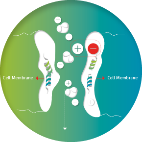 Cell membrane with VIVOBASE protection