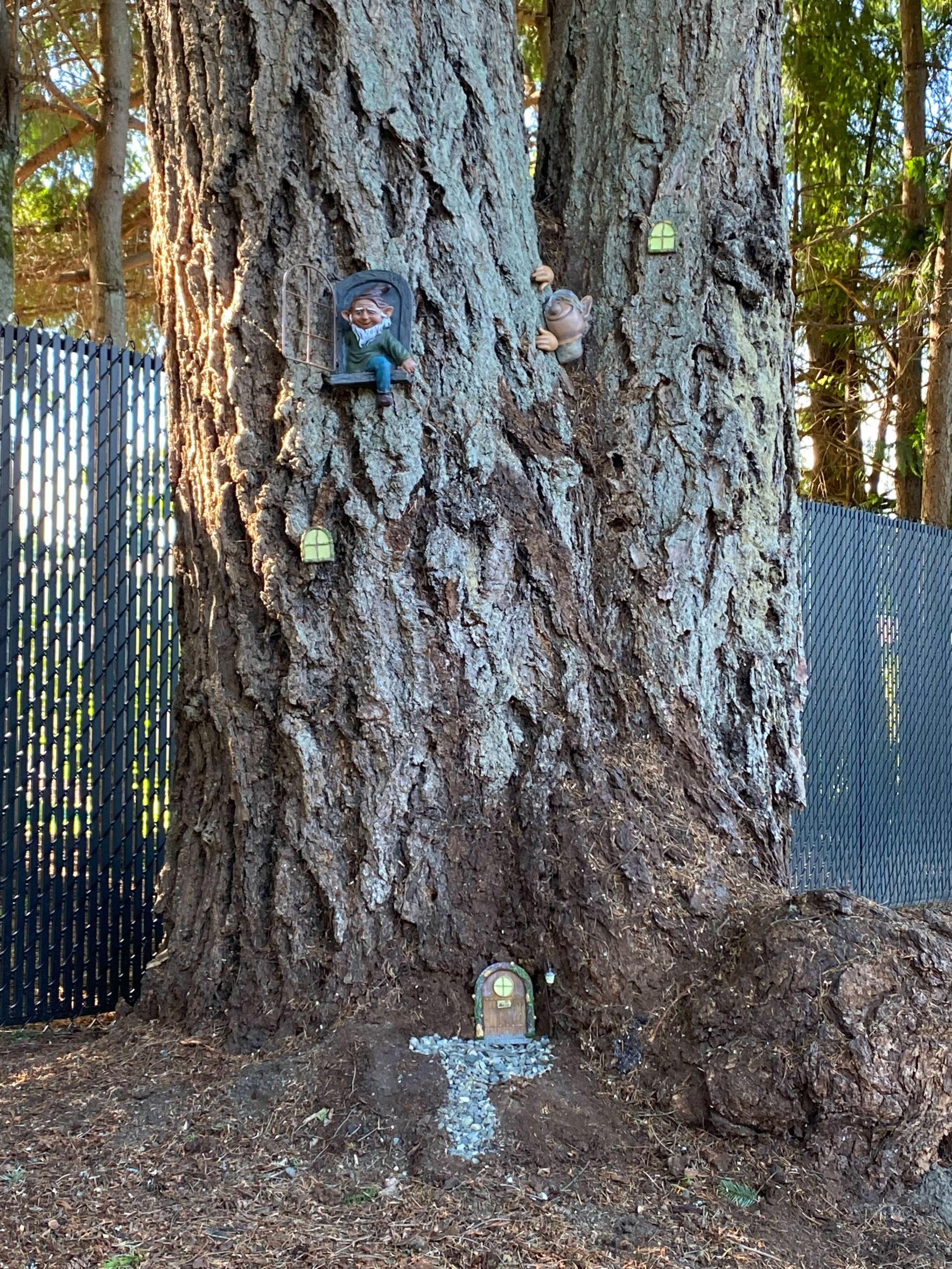 11-Gnome-Tree