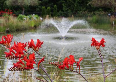 3-Fountain-and-crocosmia