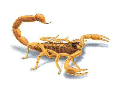 Scorpions-640w