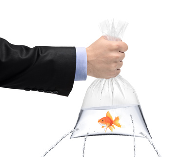 A hand holding a golden fish in a plastic bag with holes, being filled, but the water is leaking out the holes isolated on white background