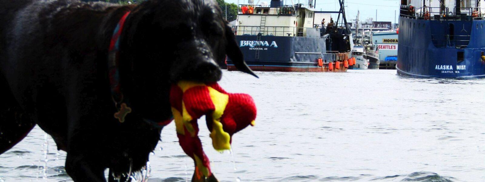 Seattle Easter Boat Parade, Lake Union, WA, SYC, Opening Day Boating, NW Yachting, Salty Dog Boating