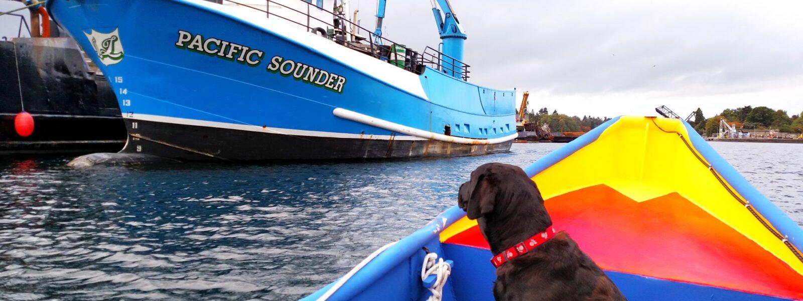 Seattle Easter Boat Parade, Salty Dog Boating, NW Yachting, NW Sailing, Shilshole Bay, Salty Dog Boating