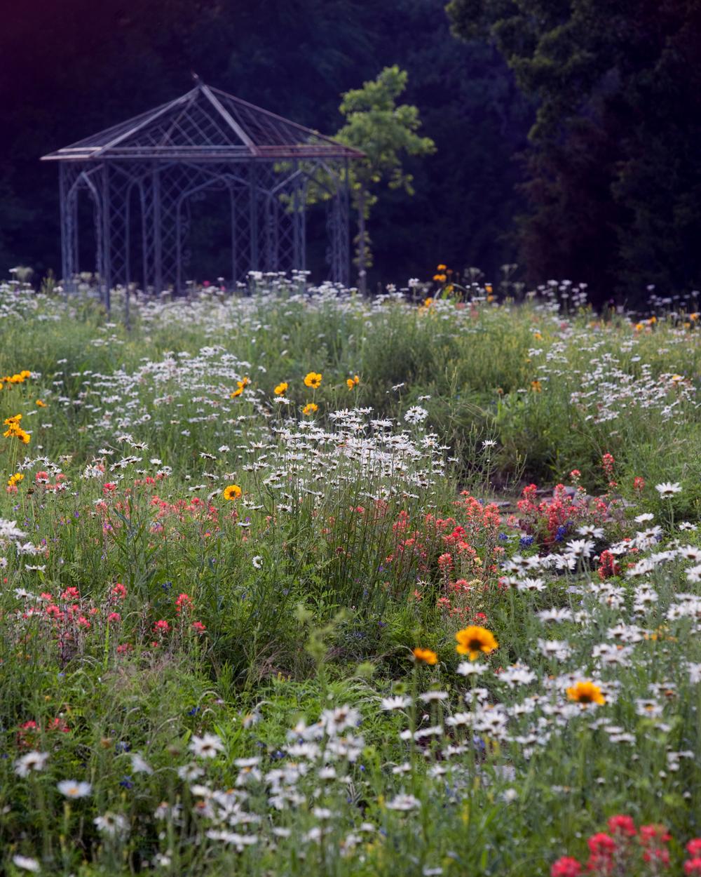 Texas Wildflower Garden Wedding Venue