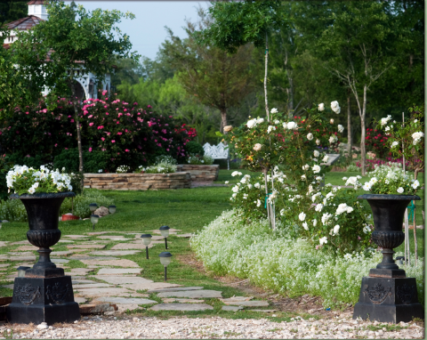 romantic garden reception ceremony