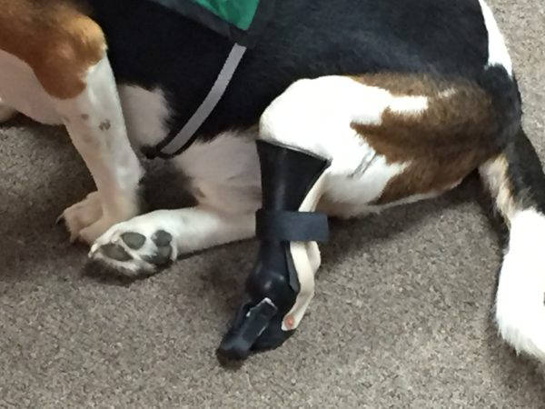 Close-up of Louie's Prosthetic Leg.