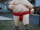 sumo-wrestling-093
