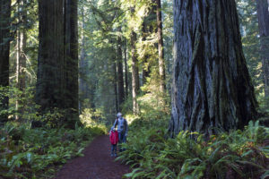 family enjoying hiking in gorgeous redwood national park