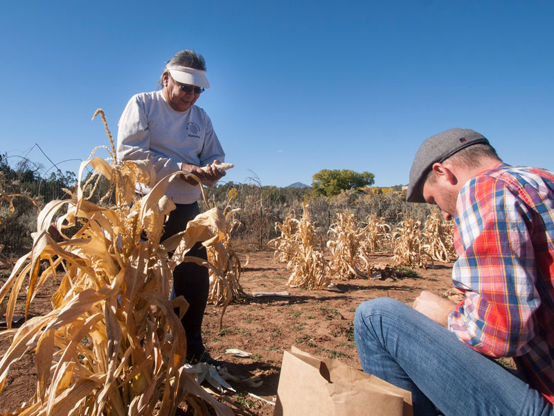 Kyle works with the Pueblo Farming Project to learn about how the Hopi developed many varieties of corn.