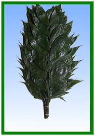 Jade Image