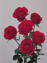Spray Roses Image