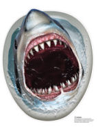 Shark toilet seat cover