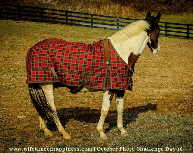 october photo challenge 2017 day 16 plaid