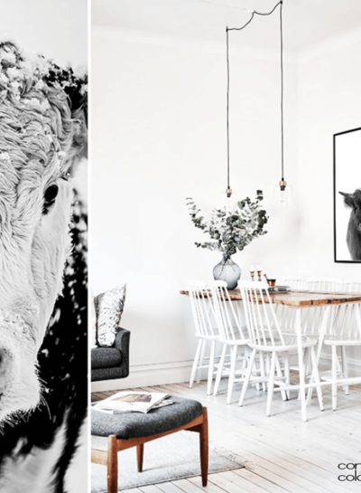 COW THEMED WALL ART