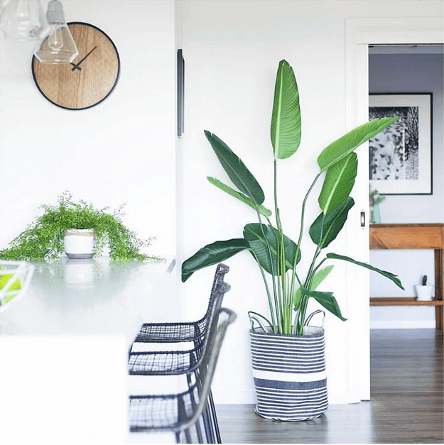 white interior with green tropical plant