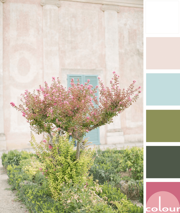 bubblegum pink, pink and green, blush pink, blush pink walls, aqua blue, turquoise blue, sage green, dark green, pretty color palettes, feminine color palette, color palette, pink blooms, blooming garden